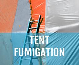 tent fumigation melbourne