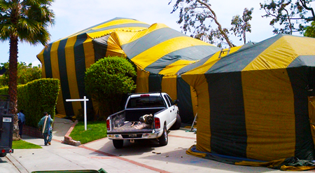 Among our many services we provide fumigation is available for those in Melbourne FL who are looking to eliminate Drywood termites Roaches Bed-Bugs and ... & Tent Fumigation Melbourne FL | Beachside Termite u0026 Pest Control